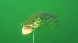 Spin fishing for pike with Blue Fox Esox siver spoon