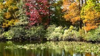 Microdac Autumn #8