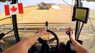 [GoPro] Erntehelfer in KANADA 🇨🇦 | CAT Lexion 590R | 535 PS Versatile | Harvest XXL