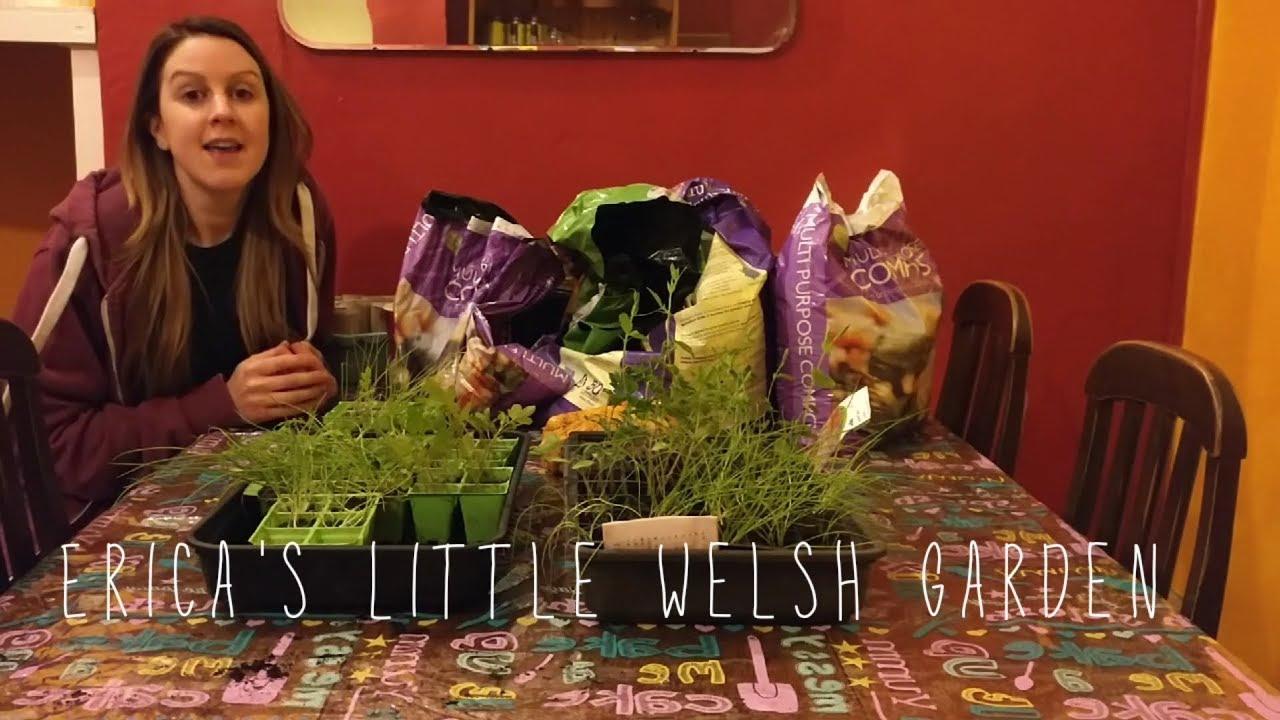 Potting On Ailsa Craig Onion Seedlings - Turbo Sets - Gardening ...