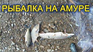 Рыбалка на Амуре Рваными сетями Весна Судак Щука Сазан