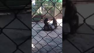 эротика в зоопарке