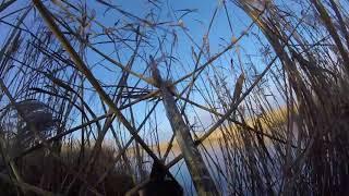 полювання на кабана 2018