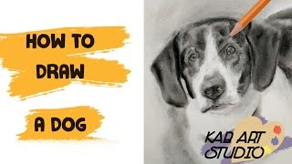 HOW TO DRAW A DOG, CHARCOAL AND PASTELS, DOG DOODLE