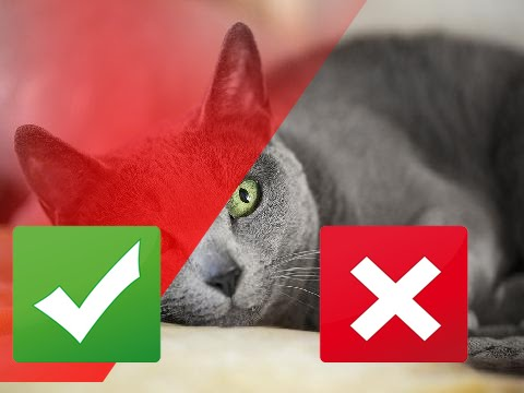9 Healthiest Cat Breeds