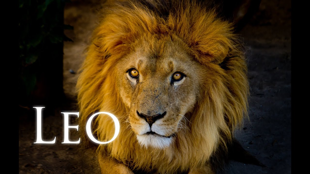Leo.,De