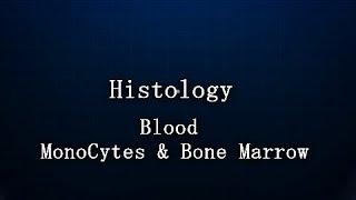 Histology : Blood  : Monocytes & Bone Marrow