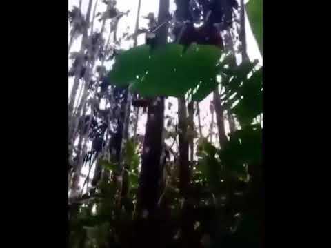 How you do logging in Brazil
