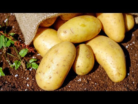 10 Benefits of Potatoes | Health And Nutrition
