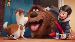 Sekretne życie zwierzaków domowych | po raz pierwszy w TV | zwiastun CANAL+