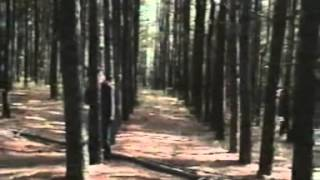 Sparklehorse feat. Nina Persson - Gold Day (Official Video)