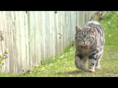Spying on your kitty using GPS