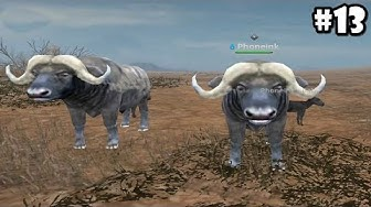 Wild Animals Online - Group of Buffalo - Android/iOS - Gameplay Episode 13