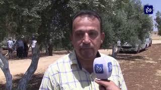 إطلاق 550 طائر حجل وفازنت في وادي راحوب - (28-7-2018)