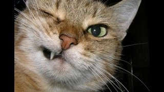 Кошачья Шалость - Naughty Kitty / Юмор - Humor