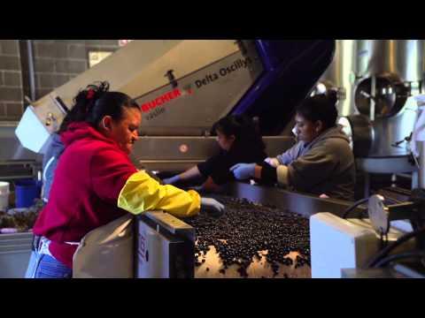 How Cabernet Sauvignon Is Made