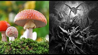 Psychedelics, Drugs, & The Bible: Fallen Angel Sorcery