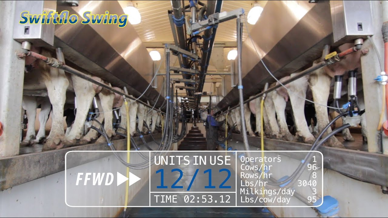 What makes swing over milking parlors so efficient youtube