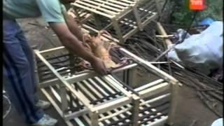 Frutos del Pais - Archipielago Juan Fernandez Isla Robinson Crusoe