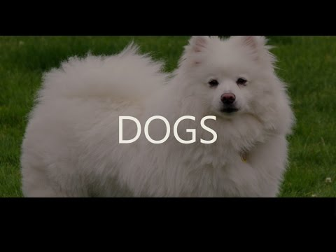 Dogs - Animals Category - Wiki Videos by Kinedio