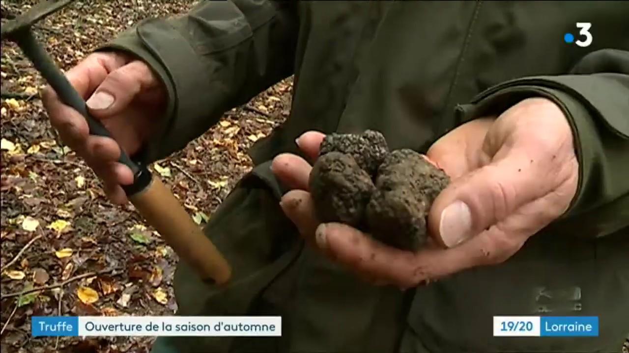 Truffes De Lorraine Stéphane Et Sa Chienne Fabia Lancent
