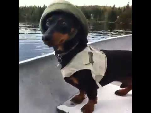 Crusoe the Celebrity Dachshund Loves Fishing! [Vine Video]