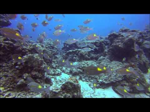 U Long Channel Palau 2015