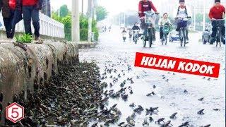 Fenomena Alam Aneh , Hujan Kodok Terjadi Di jepang Tahun 2009