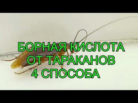 Как травить тараканов в домашних условиях борной кислотой
