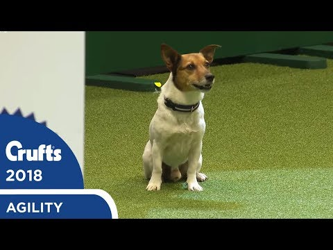 Agility - Crufts Singles Heat - S/M/L (Agility) Part 2 | Crufts 2018