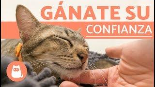 ¿Cómo ganarse la confianza de un gato? 🐱 | Suara Foundation
