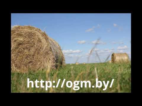 Трава сенны для похудения -