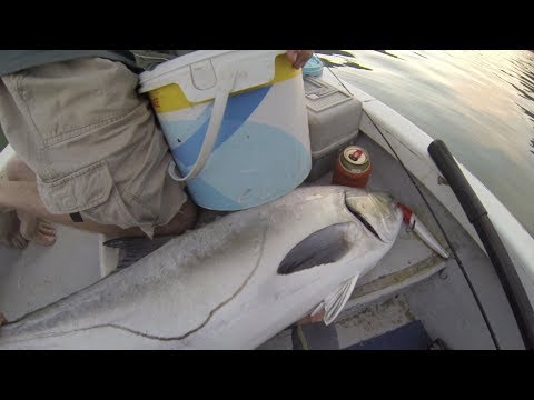 Monster Garrick (Leervis) & Some Spotted Grunter - Transkei Fishing - South Africa