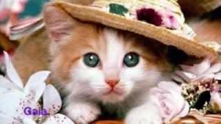 44 gatti  Zecchino D
