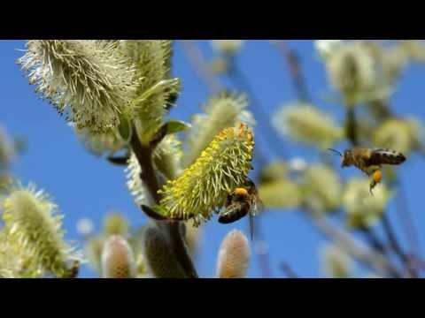 Веточка вербы.  Фотоальбом от DOMIKru net