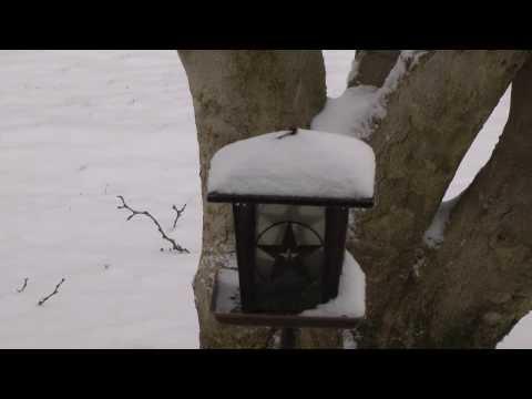 Time lapse video of winter storm Cleon - Columbus, Ohio snow accumulating on bird feeder