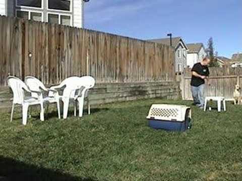 Homemade Dog Agility Course (aka Redneck Dog Agility Course)   YouTube