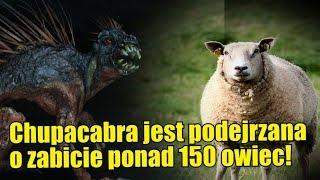 Czy chupacabra jest odpowiedzialna za śmierć ponad stu owiec w Indiach?