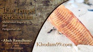 Gambar cover Ikan Tempel berkhodam   dipercaya memberikan pelarisan dagang dan pengasihan diri