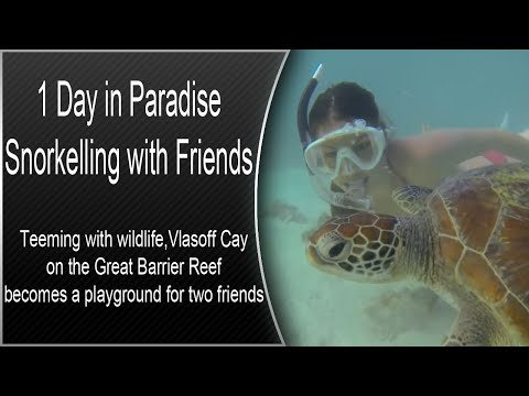 1 Day in Paradise - Snorkelling with Friends - Richard Fitzpatrick