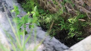 Relaxing waterfalls | Relaxing Nature Videos and Sounds