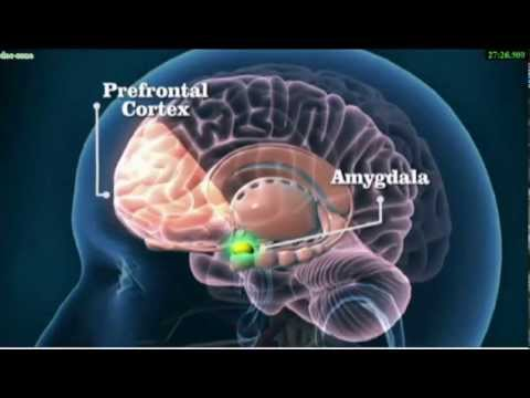 The Brain of a Psychopath - YouTube