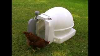 Quad Coop Chicken Coop
