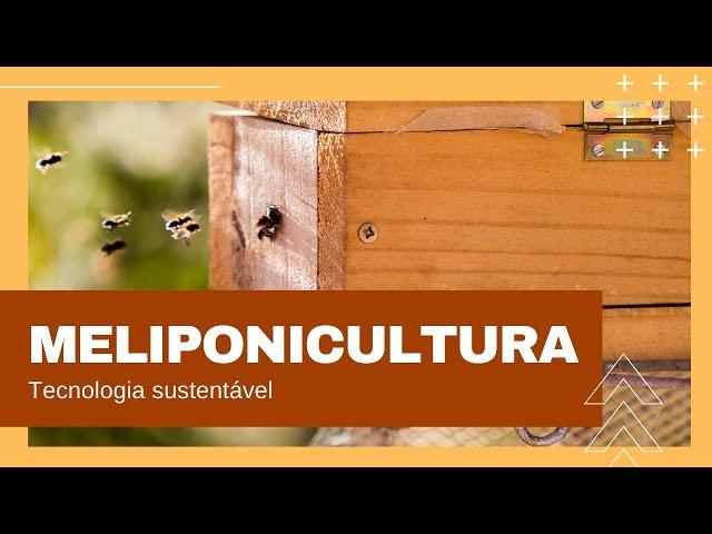Meliponicultura - Criação de Abelhas Sem Ferrão