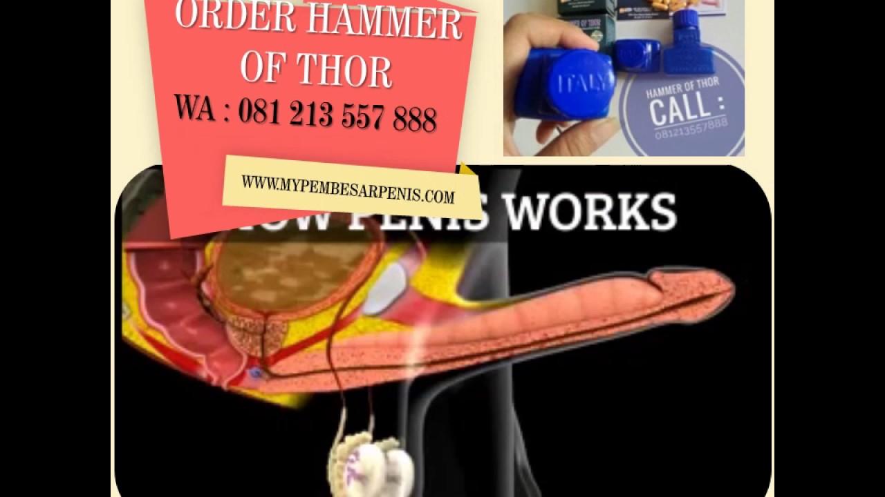 hammer of thor di medan cod 081213557888 youtube