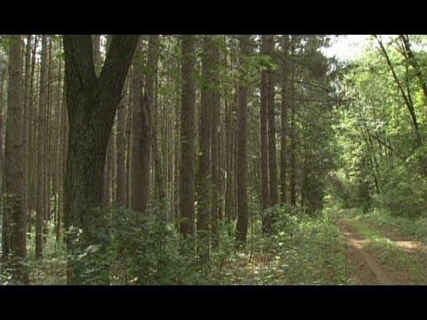 "Illinois Adventure #1605 ""Sand Ridge State Forest"""