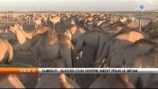 Djibouti : Succès d'un centre inédit pour le bétail