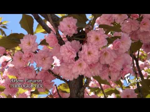 Деревья для сада, фото