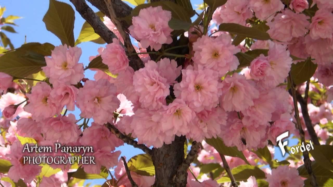 фото японский сад