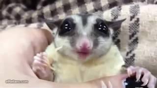 Детеныши животных австралии